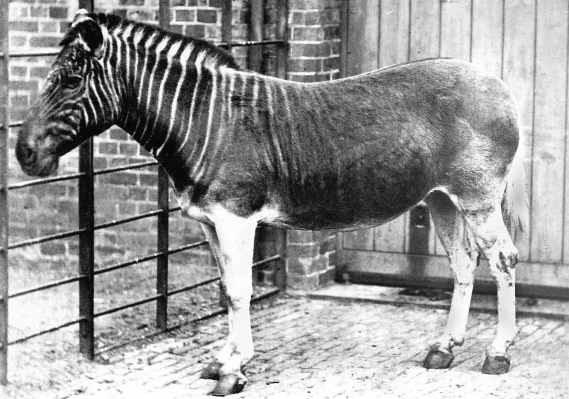Quagga_photo.jpg
